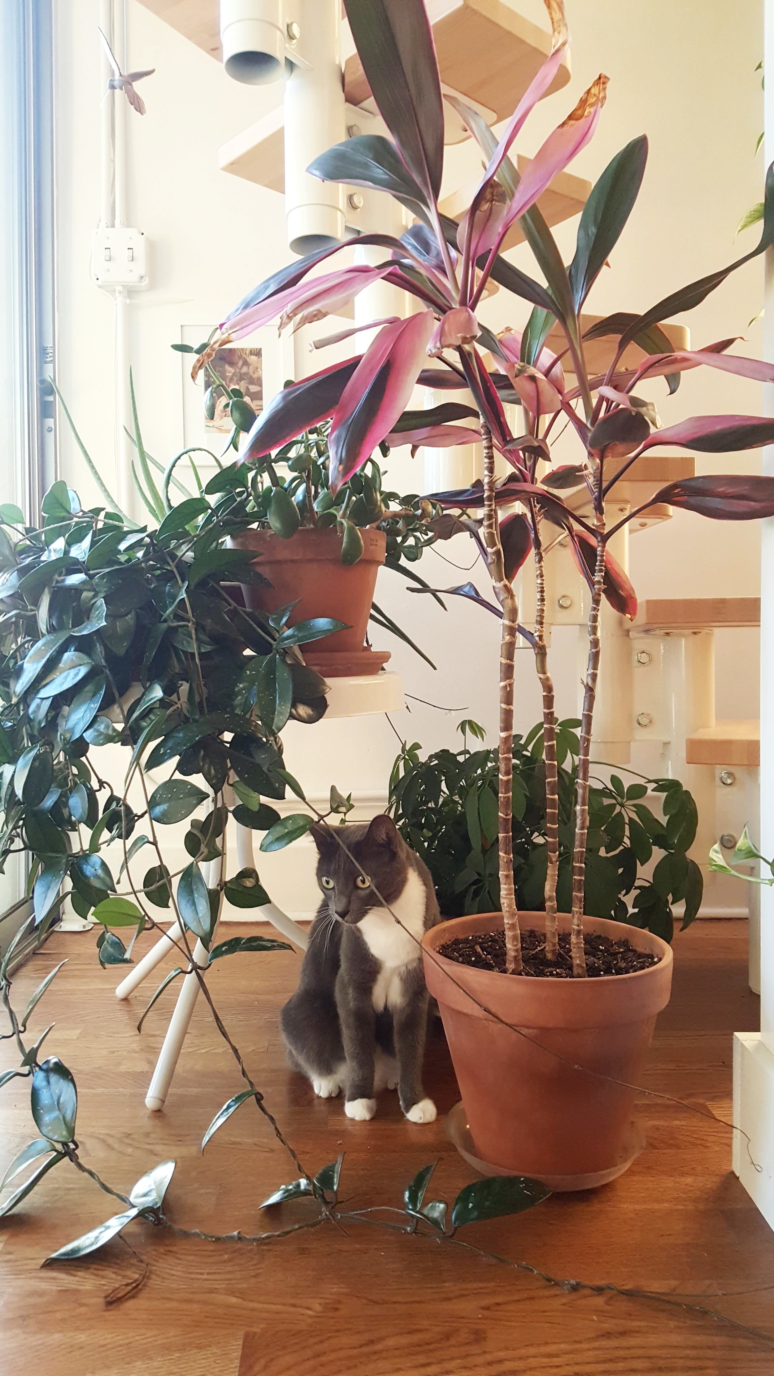 Nadine observes from the under-the-stairs jungle.