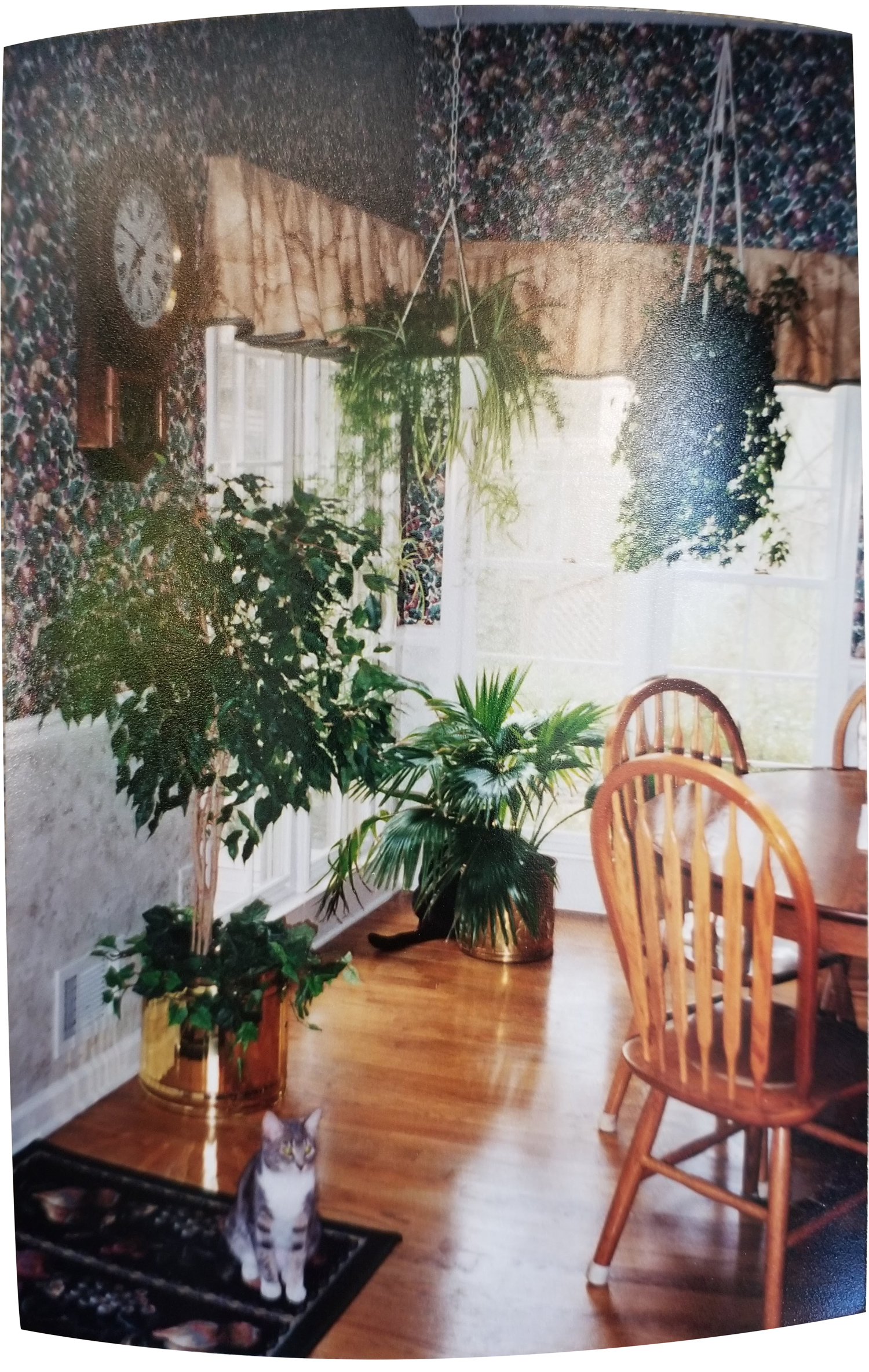 1996-momskitchen-tia-bianca-plants.jpg