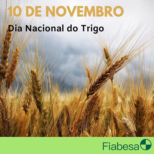O trigo foi o primeiro cereal que o ser humano aprendeu a cultivar. Ele é a base da alimentação humana e o segundo grão mais produzido do mundo! Parabéns a todos envolvidos na cadeia! Contem sempre com a Fiabesa para embalar seus melhores resultados! . . . #fiabesa #sacaria #sacariaderafia #ráfia #amaiordobrasil #usefiabesa #qualidadeassegurada #diadotrigo #trigo #abitrigo