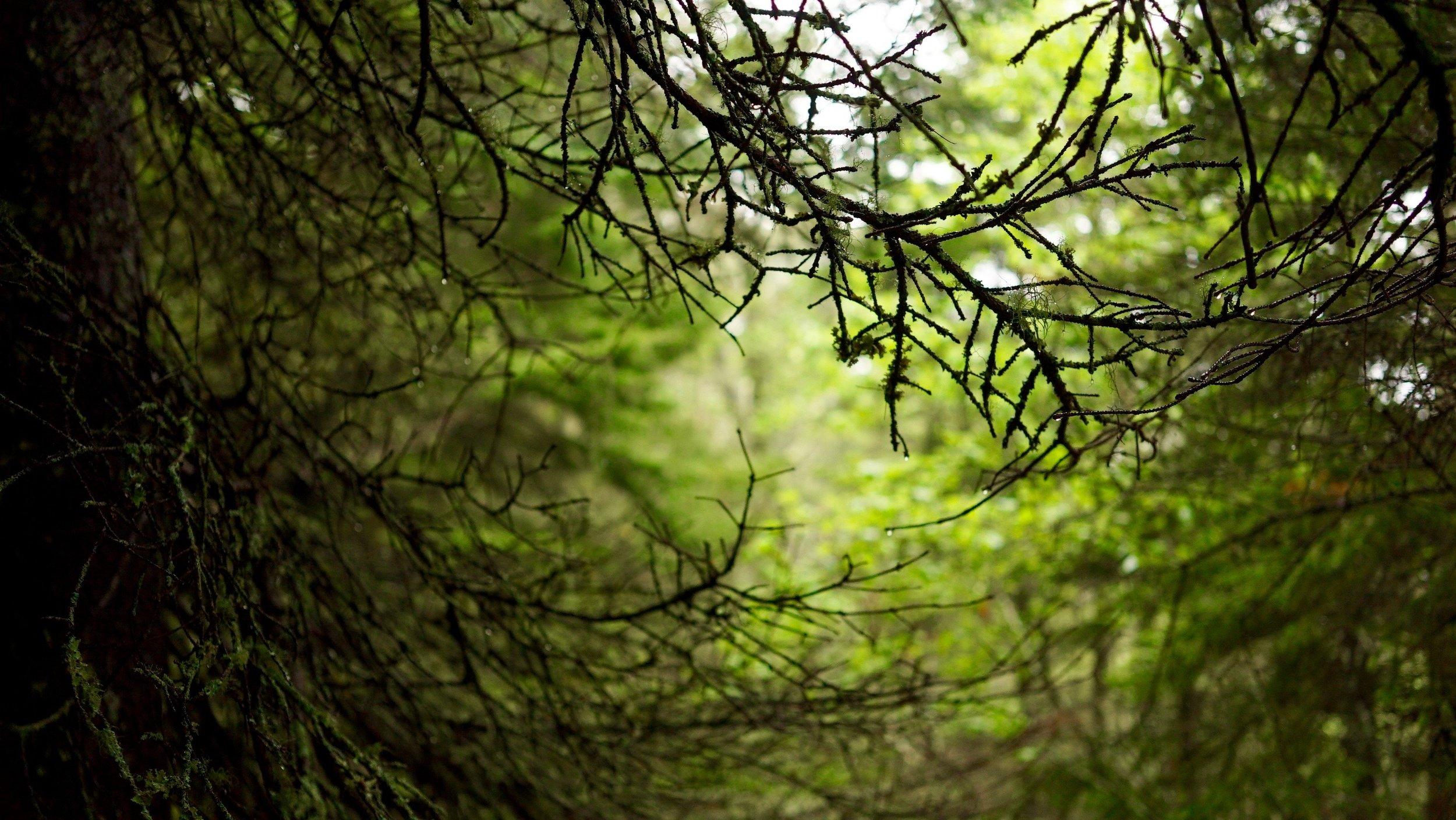 nk-branches.jpg