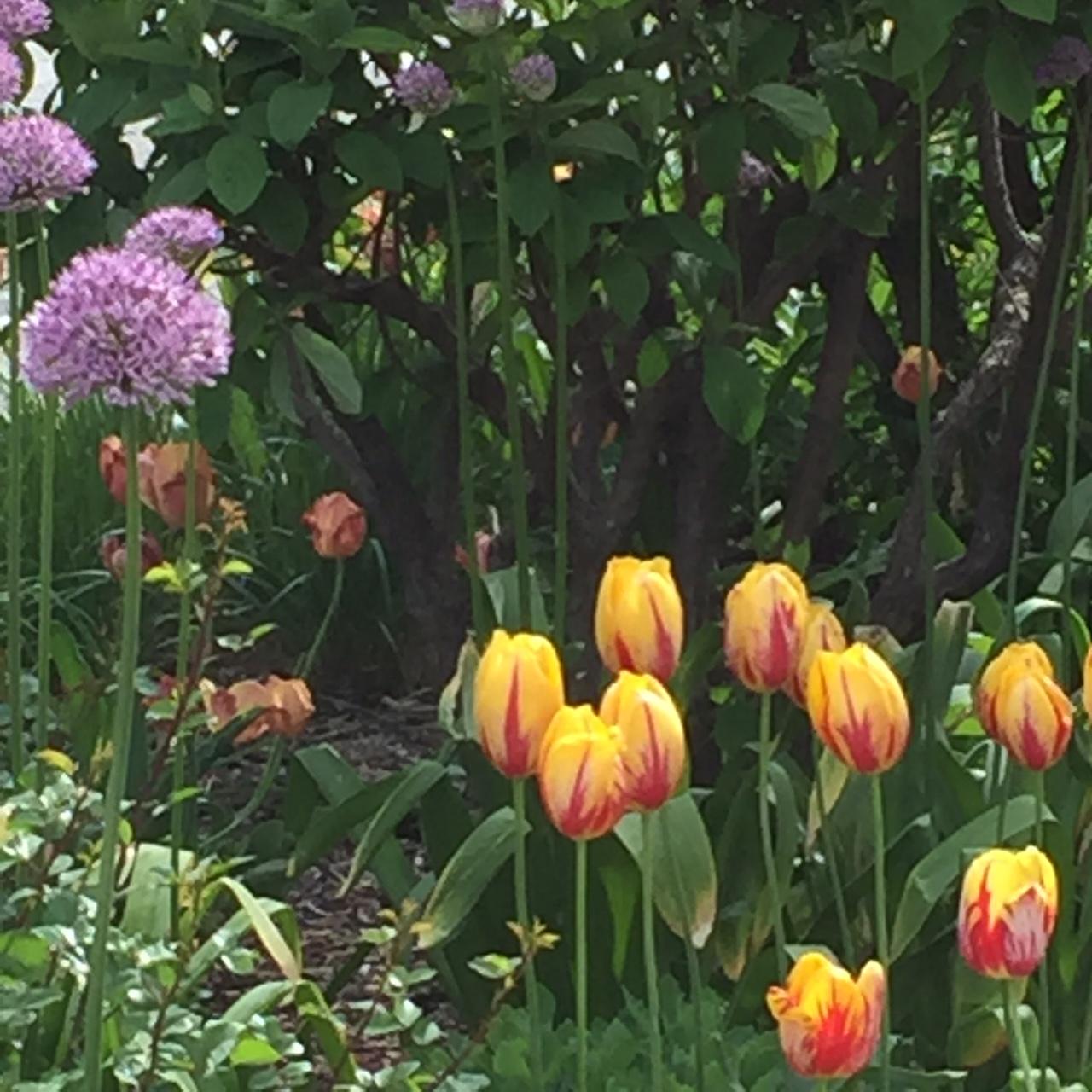 Flash Back Friday, Innkeeper's Garden!