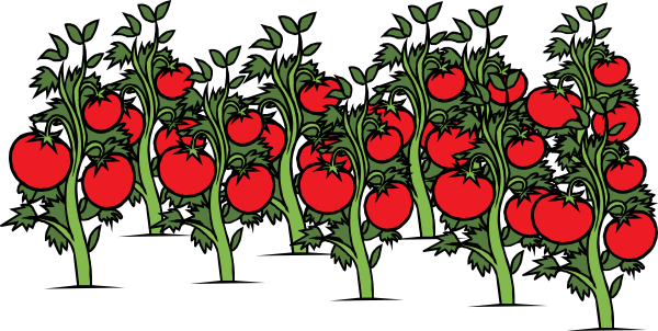 tomato-patch-hi.png