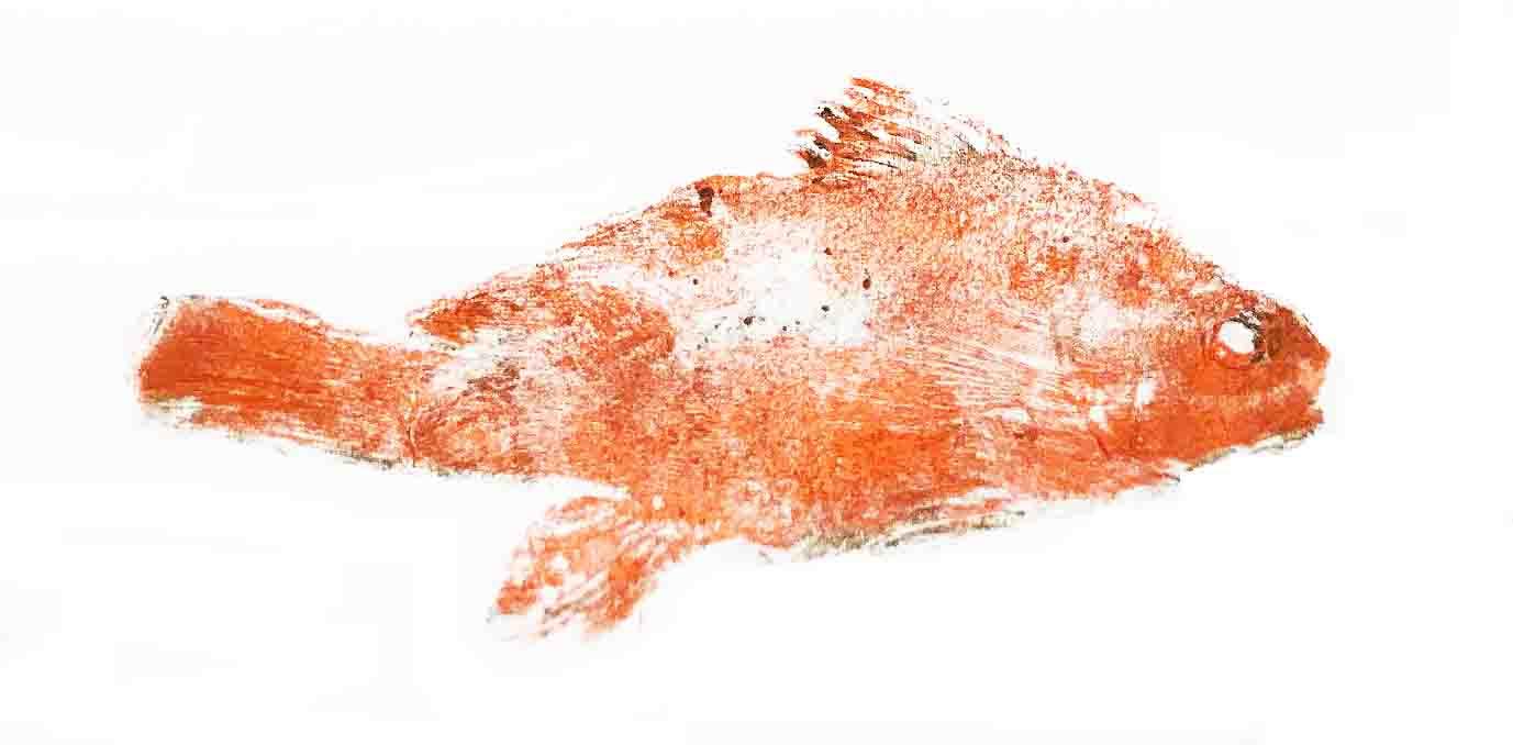fishprint cropped.jpg