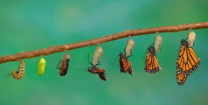 metamorfosis-de-las-mariposas.jpg