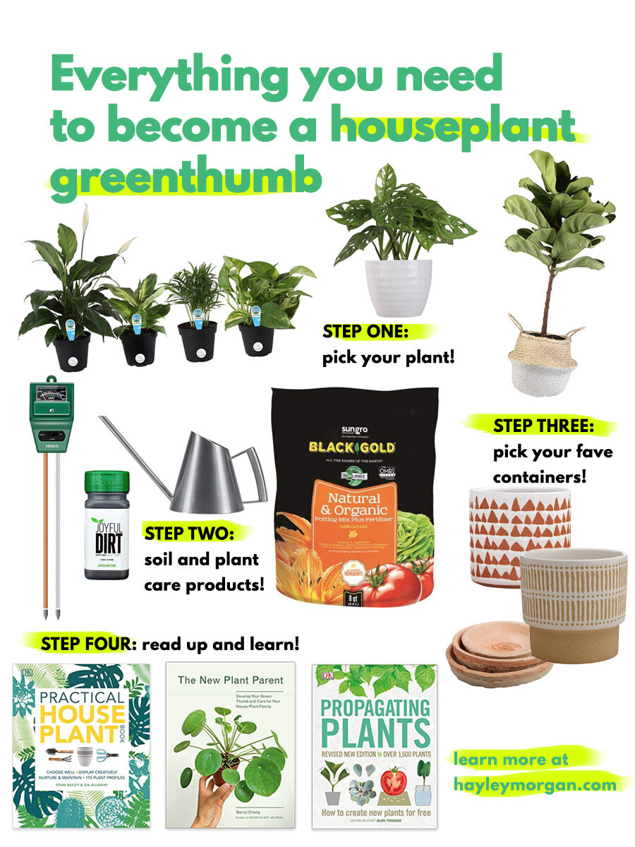 everything you need for houseplants.jpg
