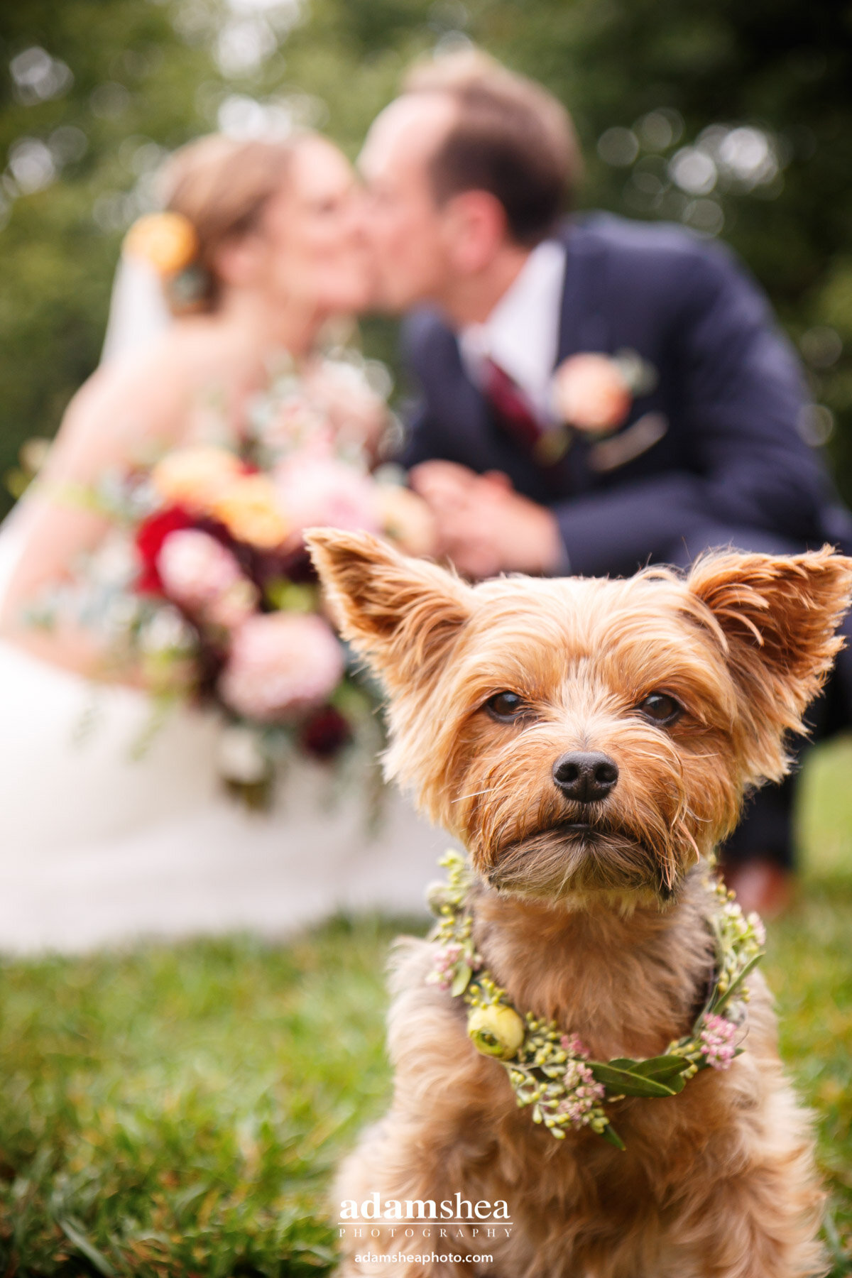 Gorgeous Wedding Fields at the Reserve - Stoughton WI - Adam Shea Photography - Bride and Groom With Pup