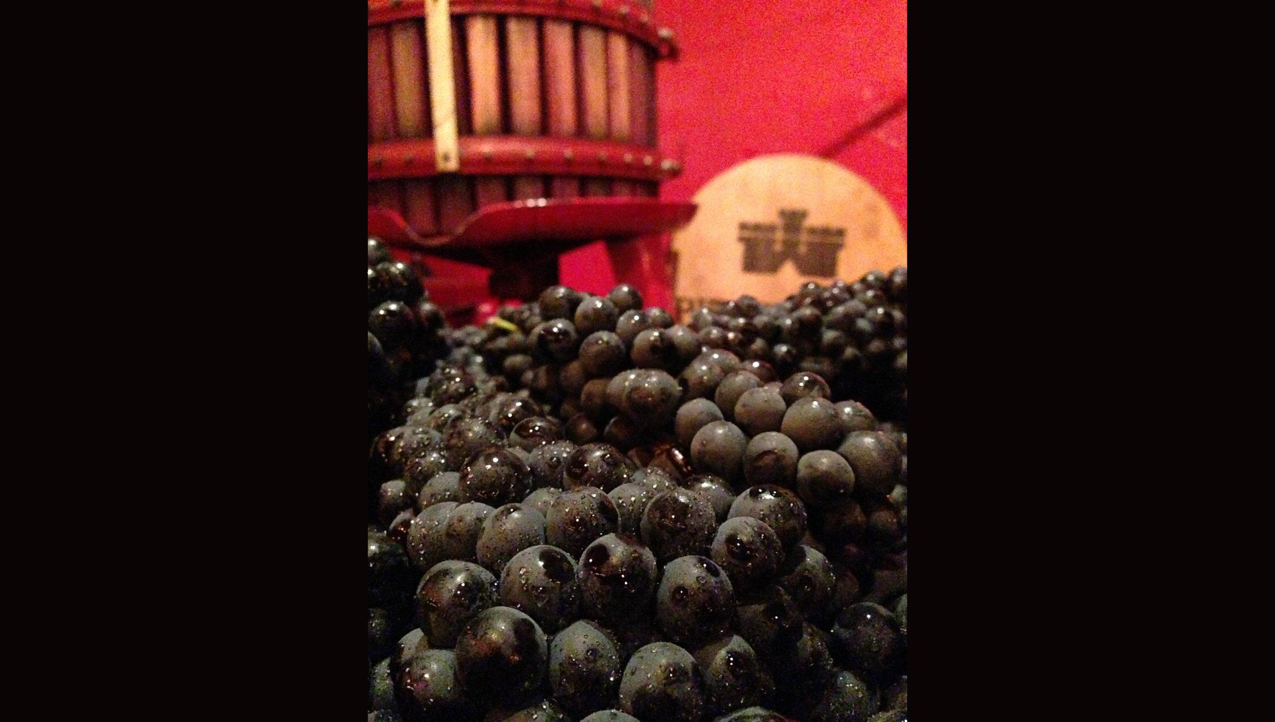Grapes Press.jpg