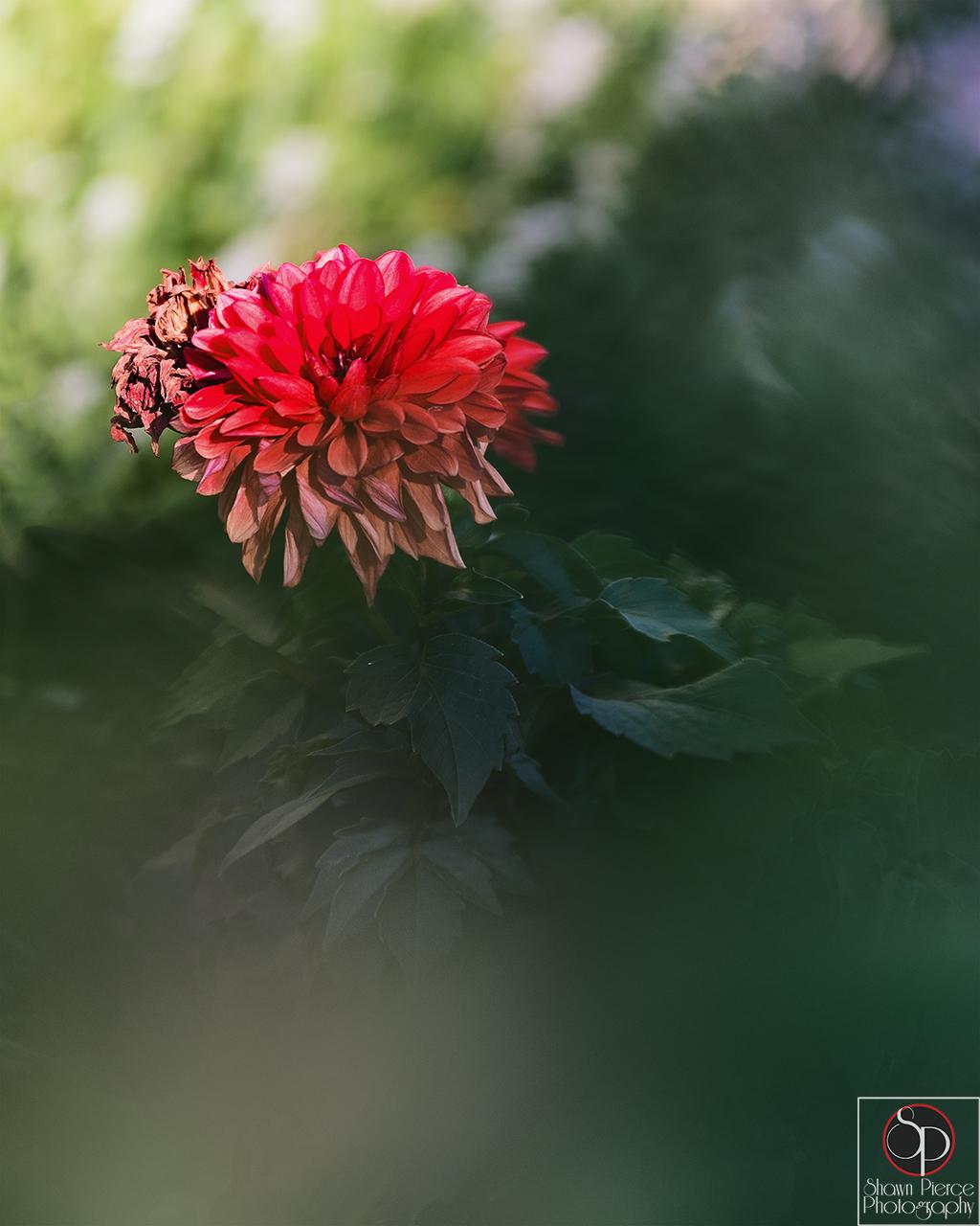 SPP_7520 2 fb.jpg