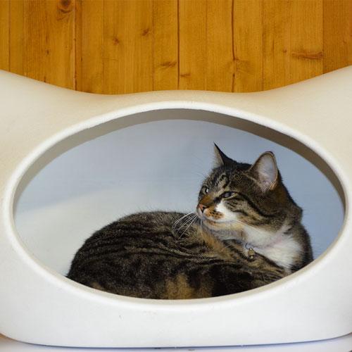 Ihre Katze entscheidet selbst, ob ihr nach Ruhe oder Action ist. Sie hat die Wahl zwischen zwei Aufenthaltsräumen und Dutzenden Körbchen.