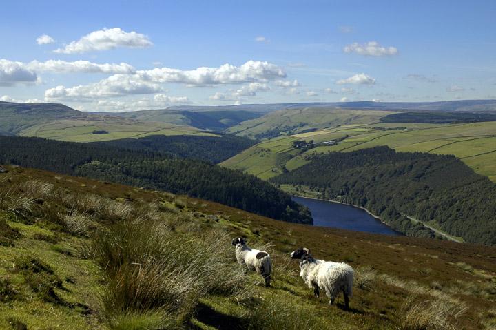 Nacionalni park Peak District v Veliki Britaniji, blizu katerega stoji Nathalie Bond delavnica