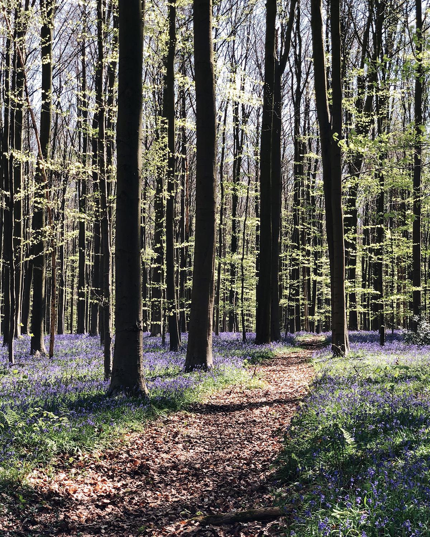 ohranimo-naravo-čisto-in-neokrnjeno-lili-in-roza-blog-skrb-za-okolje-gozd-1.JPG