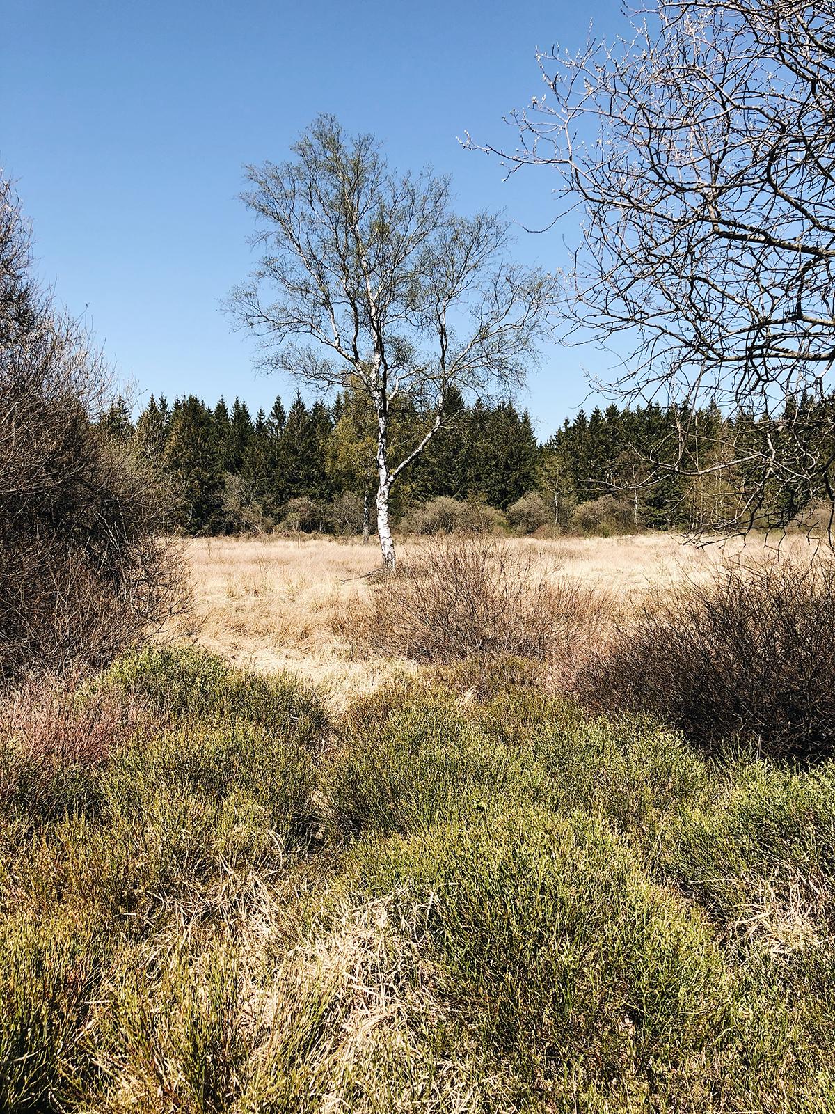 ohranimo-naravo-čisto-in-neokrnjeno-lili-in-roza-blog-skrb-za-okolje-gozd-2.JPG