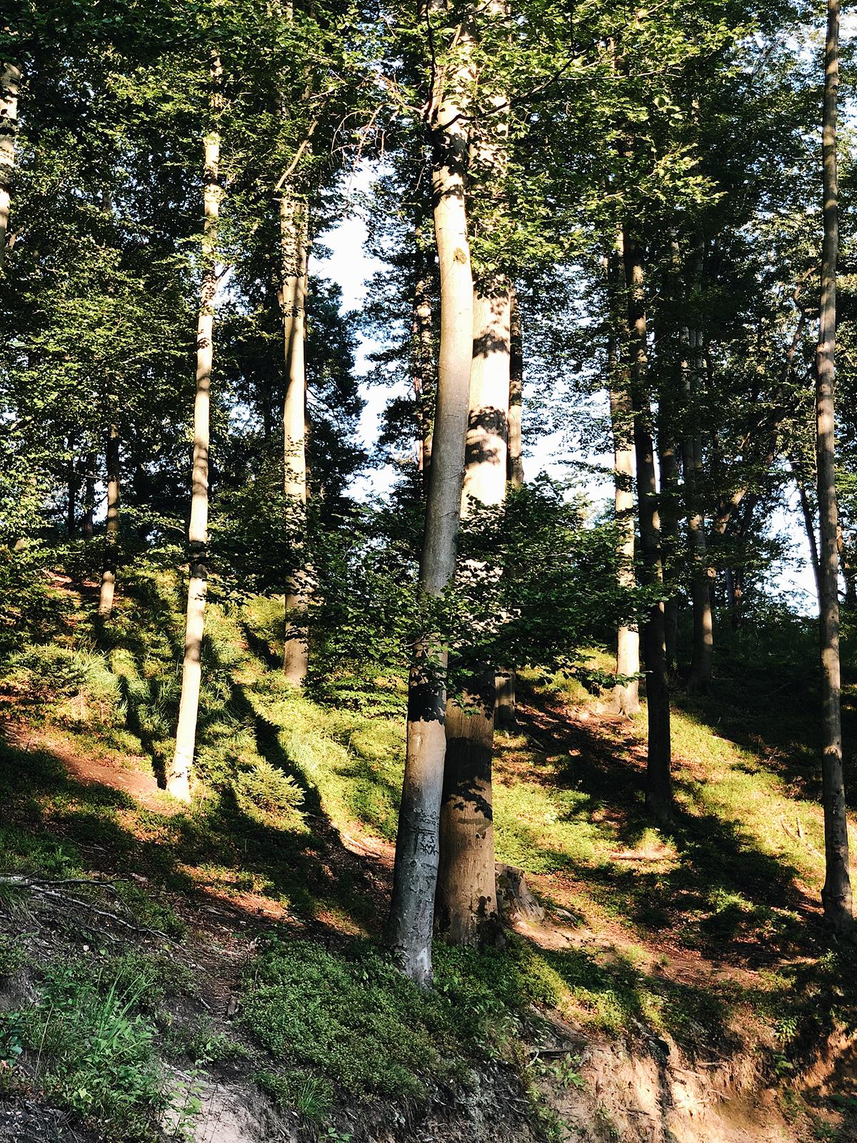 ohranimo-naravo-čisto-in-neokrnjeno-lili-in-roza-blog-skrb-za-okolje-gozd-8.JPG