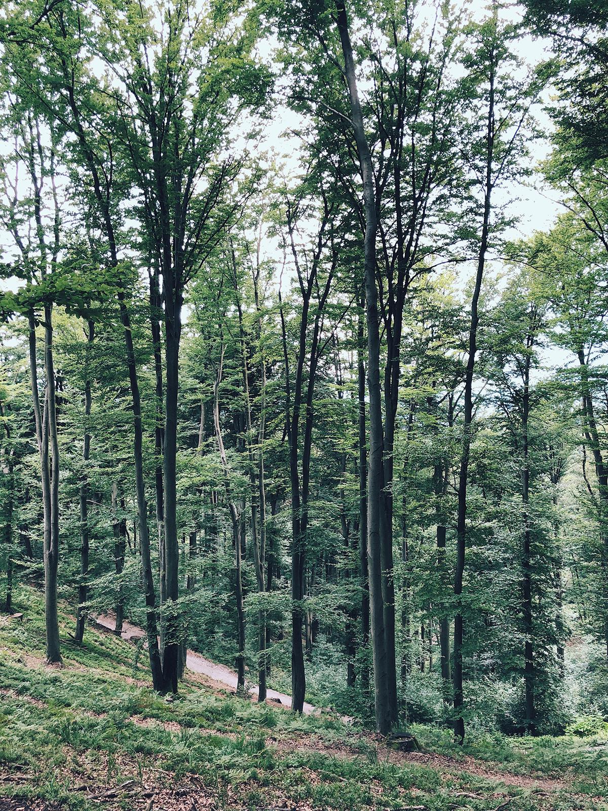 ohranimo-naravo-čisto-in-neokrnjeno-lili-in-roza-blog-skrb-za-okolje-gozd-9.JPG