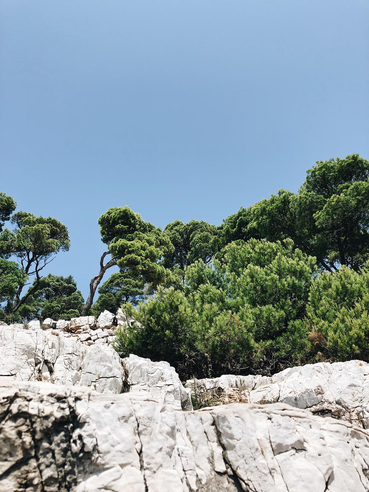 ohranimo-naravo-čisto-in-neokrnjeno-lili-in-roza-blog-skrb-za-okolje-gozd-11.JPG
