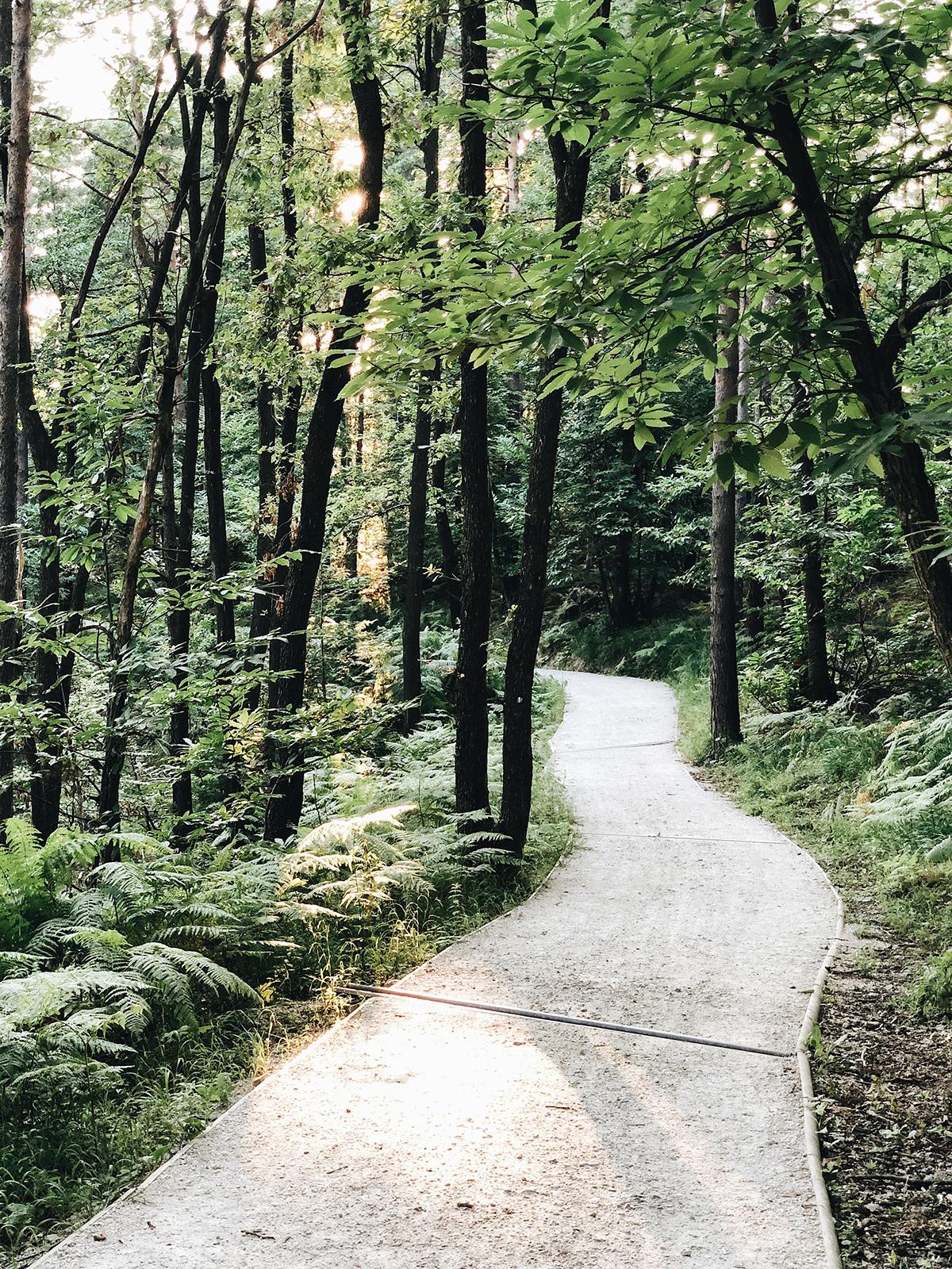 ohranimo-naravo-čisto-in-neokrnjeno-lili-in-roza-blog-skrb-za-okolje-gozd-10.JPG