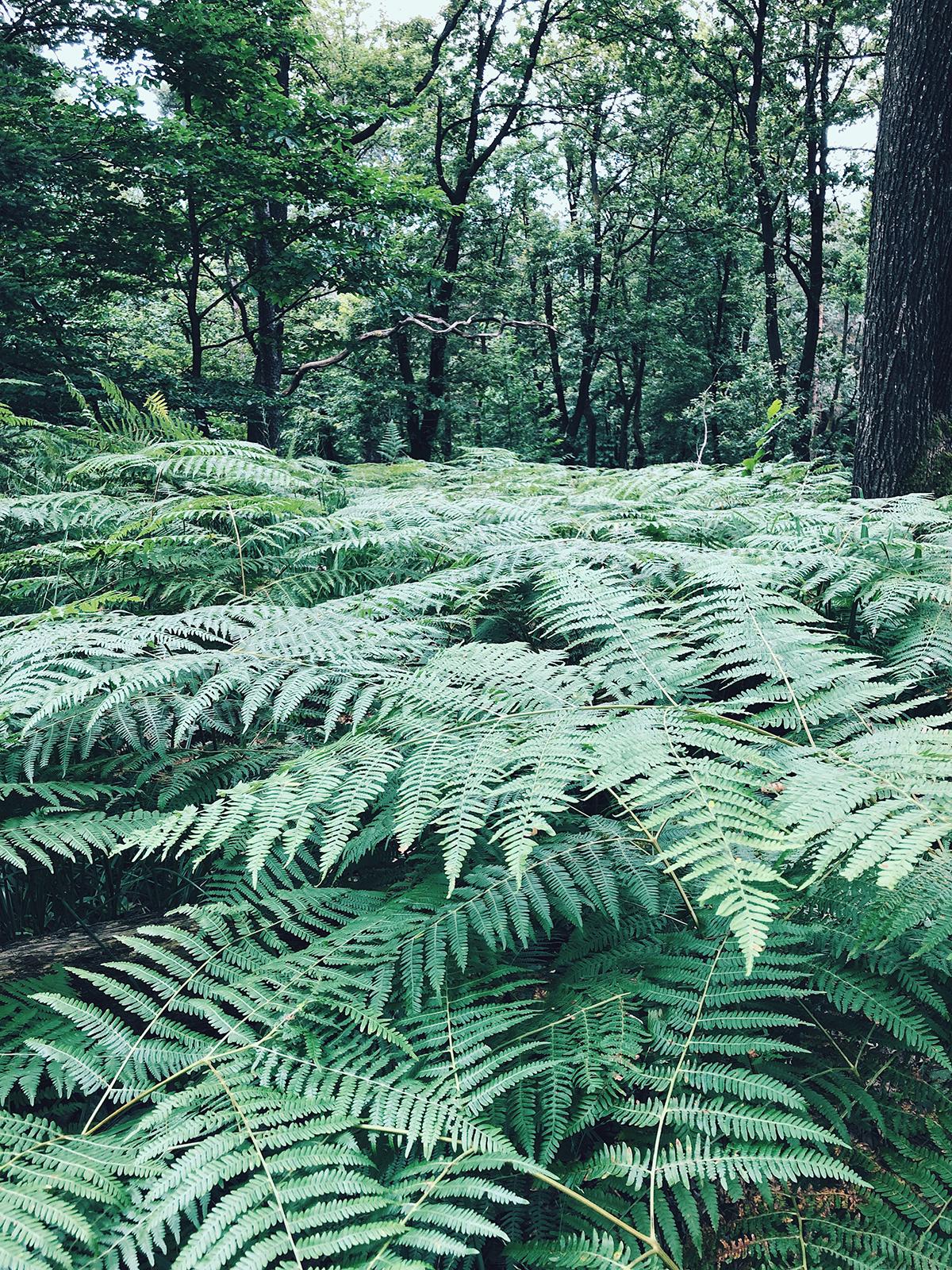 ohranimo-naravo-čisto-in-neokrnjeno-lili-in-roza-blog-skrb-za-okolje-gozd-18.JPG