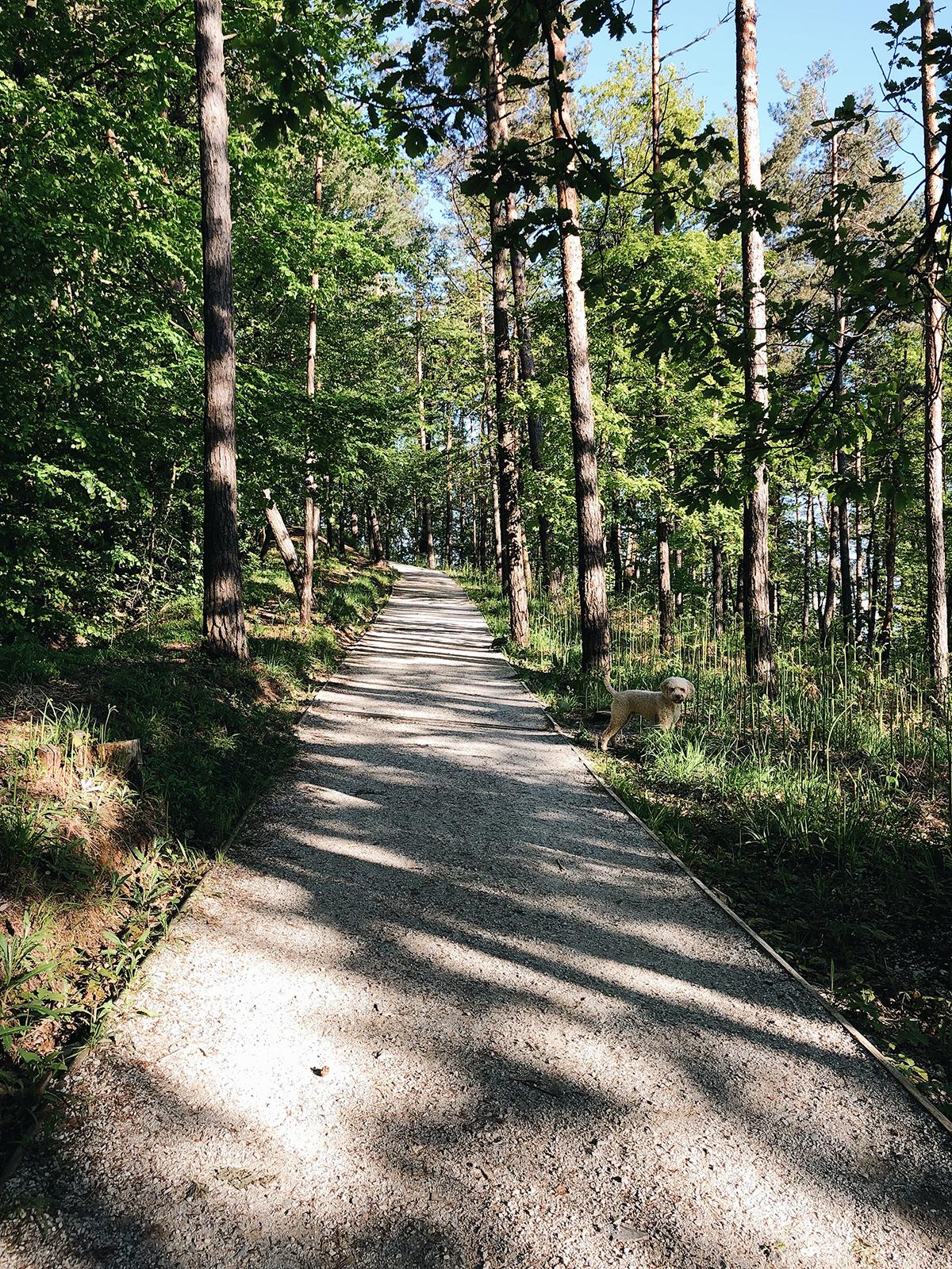 ohranimo-naravo-čisto-in-neokrnjeno-lili-in-roza-blog-skrb-za-okolje-gozd-19.JPG