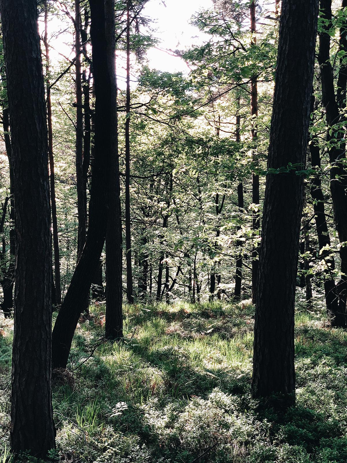 ohranimo-naravo-čisto-in-neokrnjeno-lili-in-roza-blog-skrb-za-okolje-gozd-20.JPG
