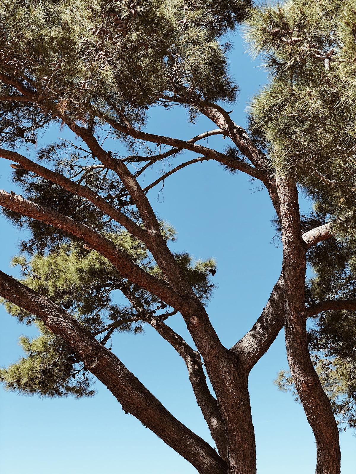 ohranimo-naravo-čisto-in-neokrnjeno-lili-in-roza-blog-skrb-za-okolje-gozd-21.JPG