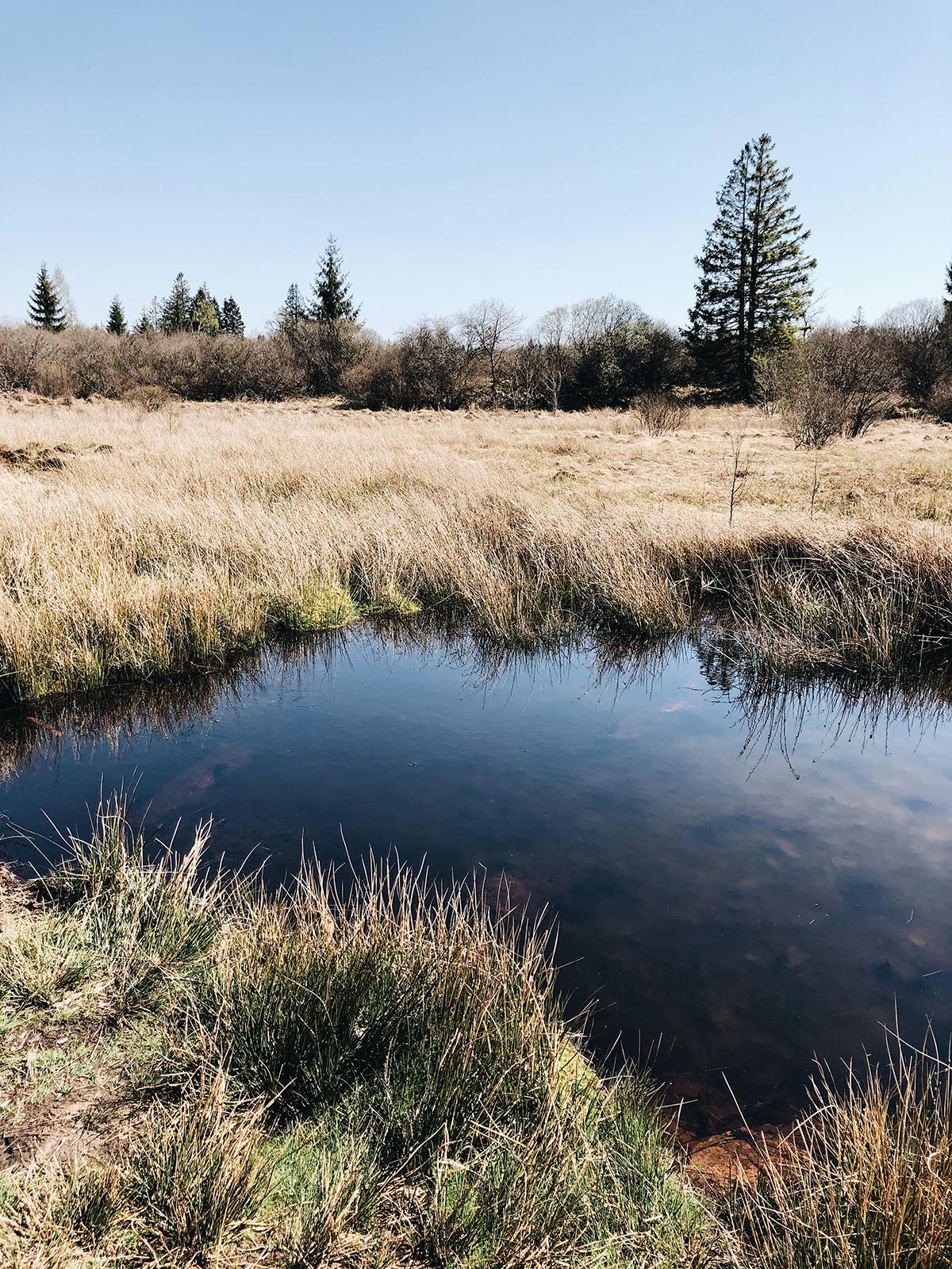 ohranimo-naravo-čisto-in-neokrnjeno-lili-in-roza-blog-skrb-za-okolje-reke-3.JPG