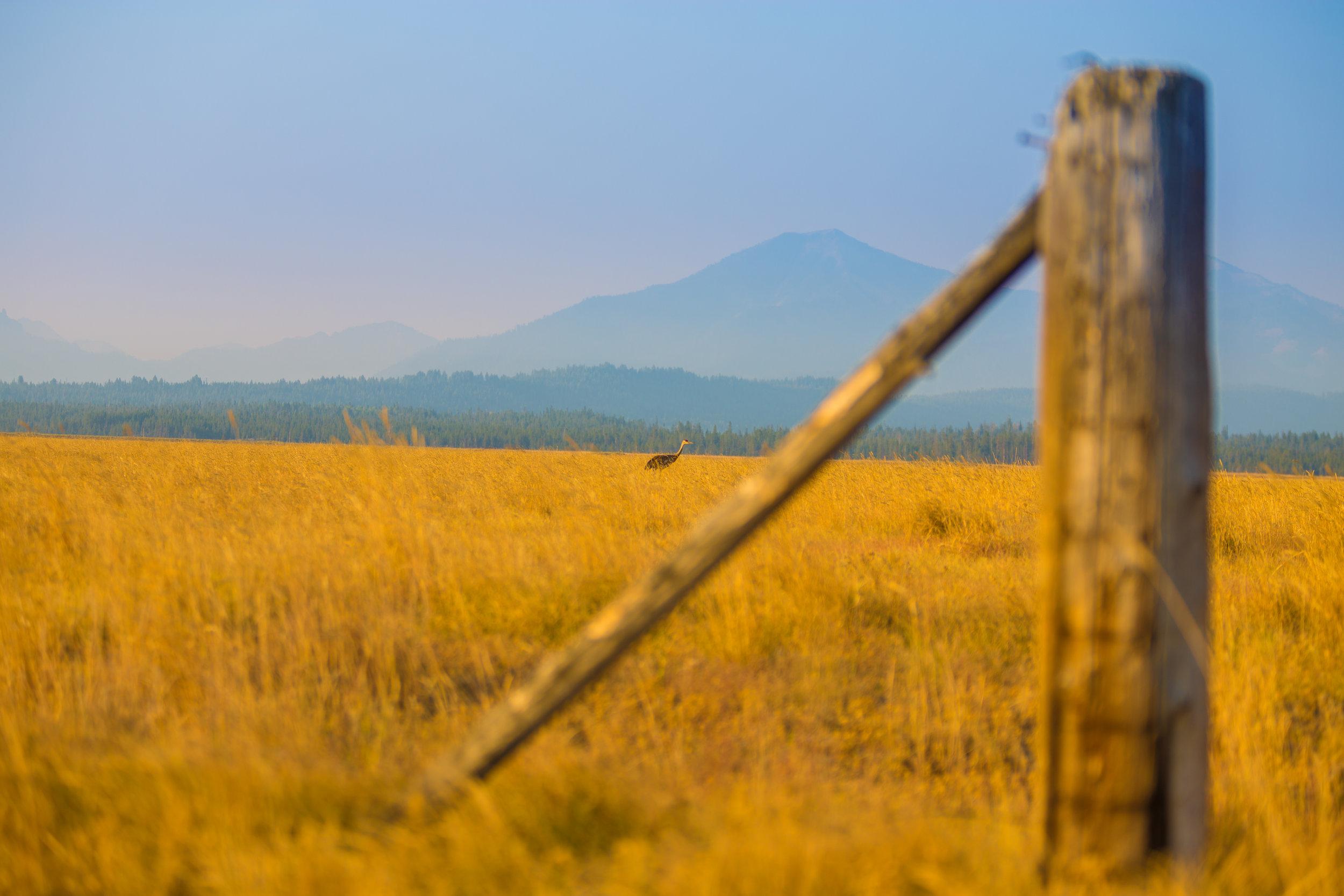 08.09.18 Idaho Sun Valley-16.jpg