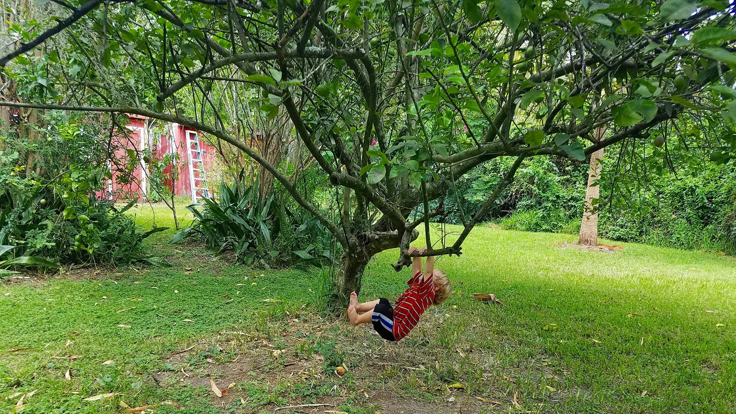 Bashy+Tree.jpg