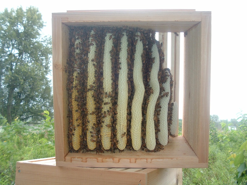 Warre beehive inspection