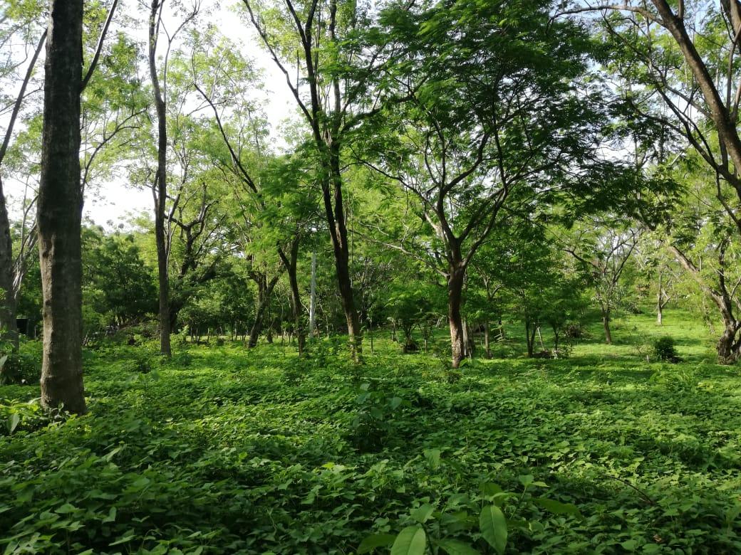 Verde: San Juan Del Sur, Nicaragua
