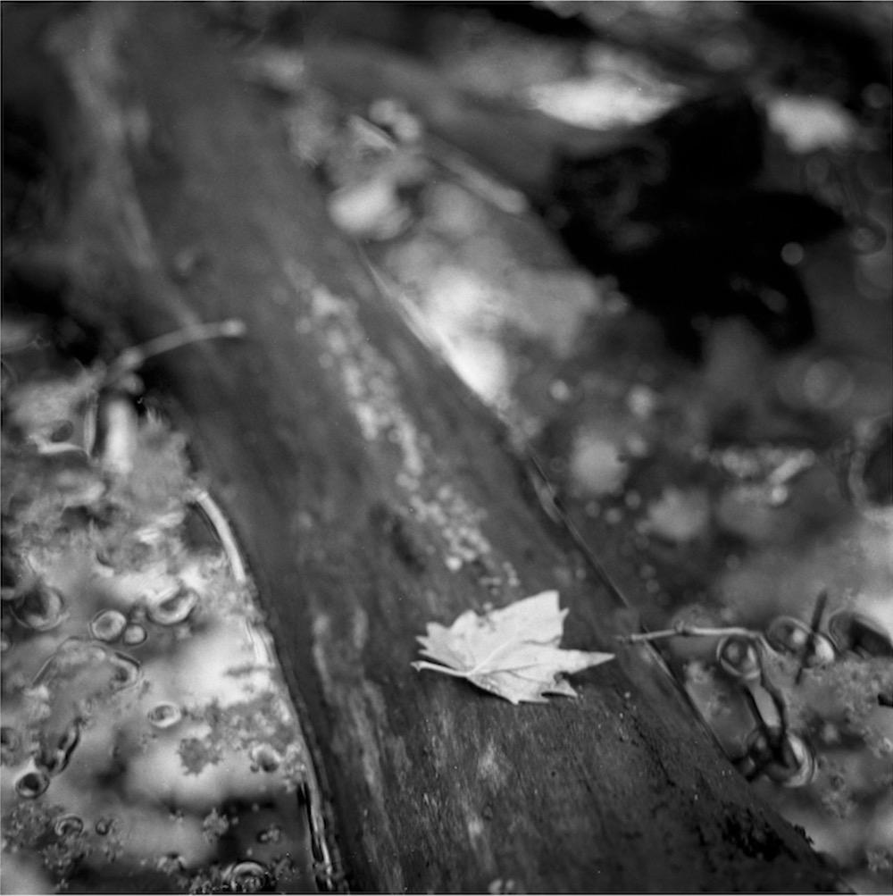 yesterday autumn came_01.jpg
