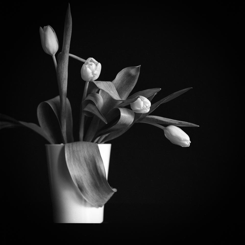 Tulips_002.jpg