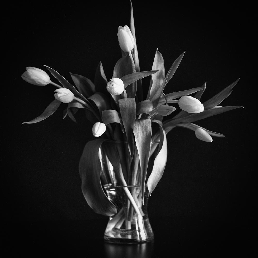 Tulips_001.jpg