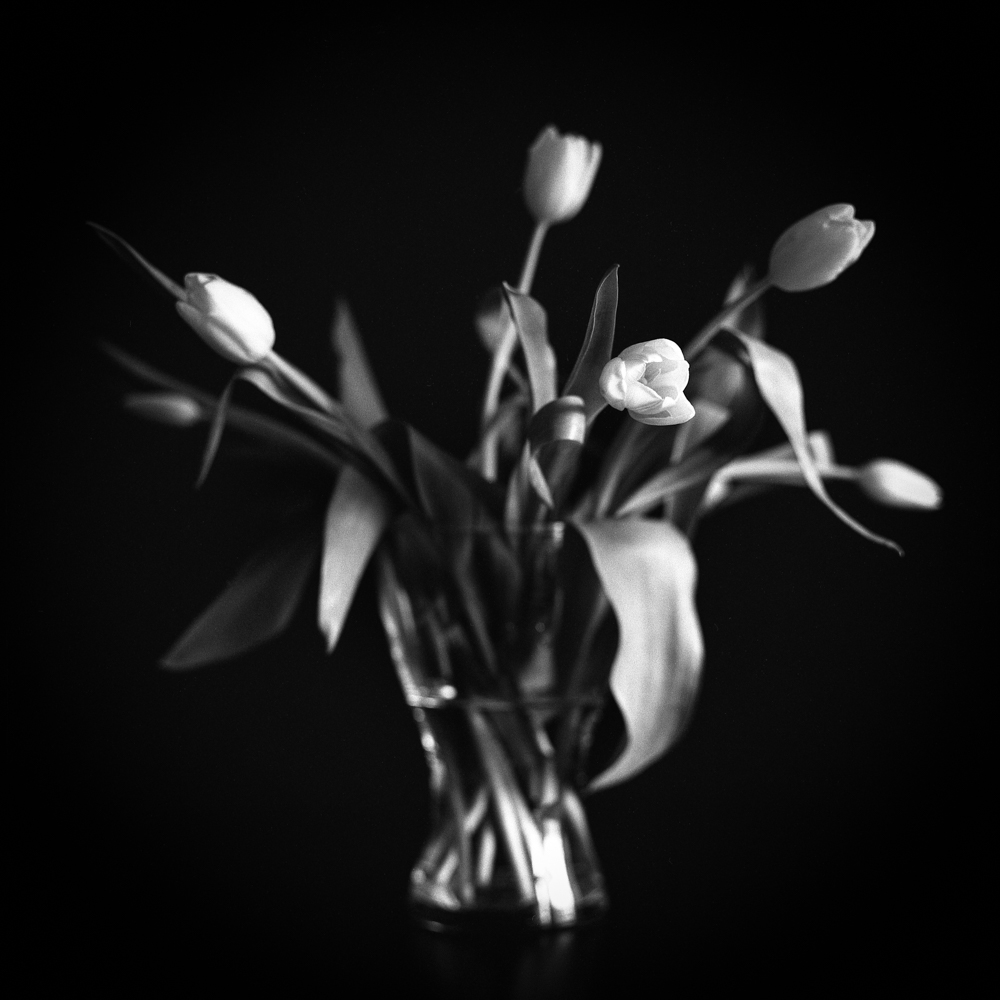 Tulips_006.jpg
