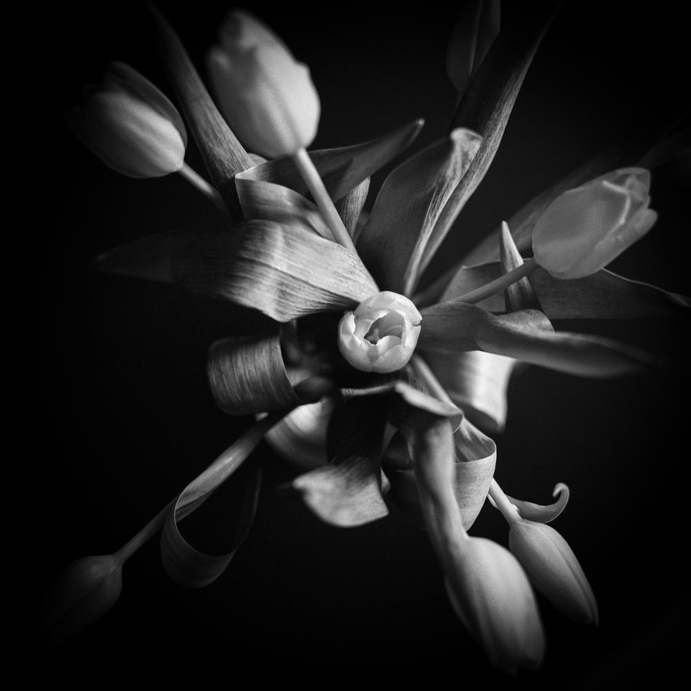 Tulips_008.jpg