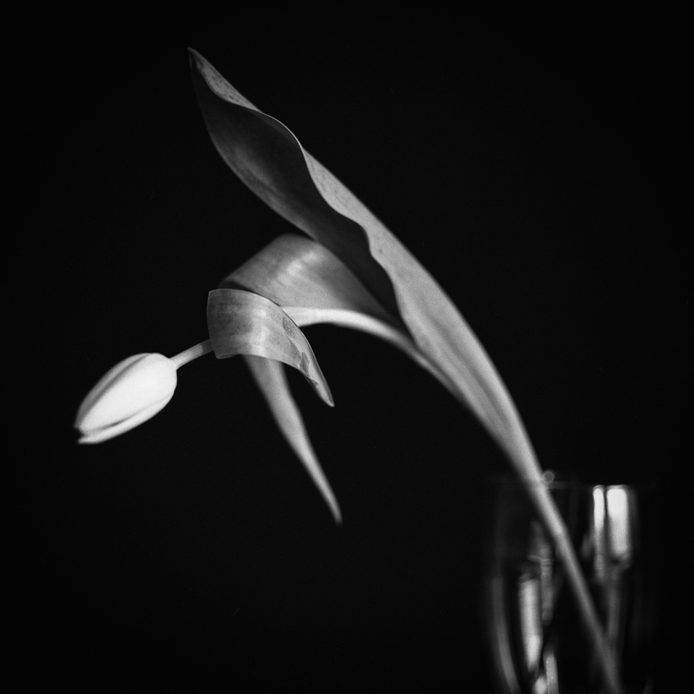 Tulips_009.jpg