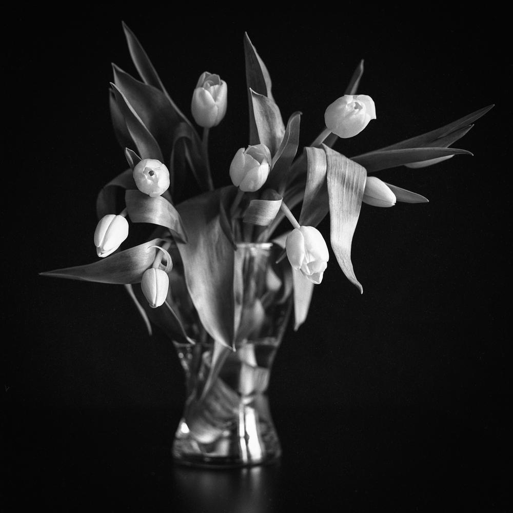 Tulips_010.jpg