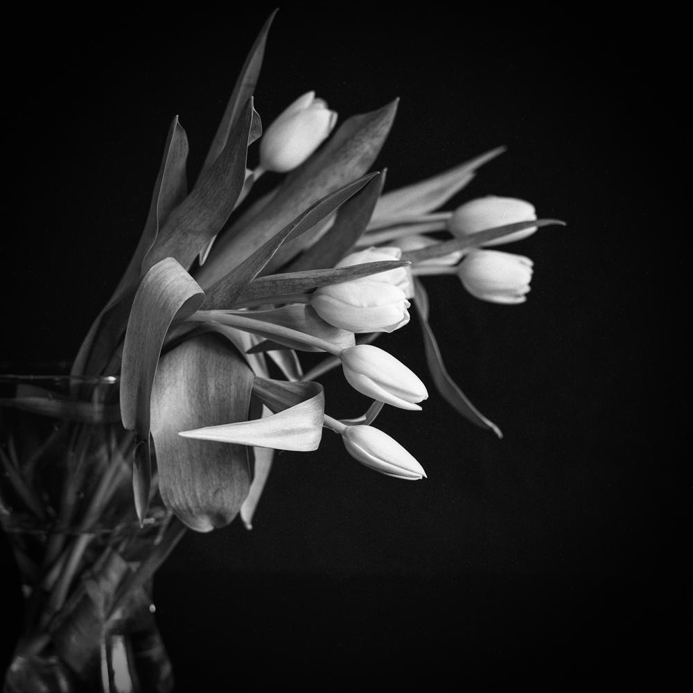 Tulips_011.jpg