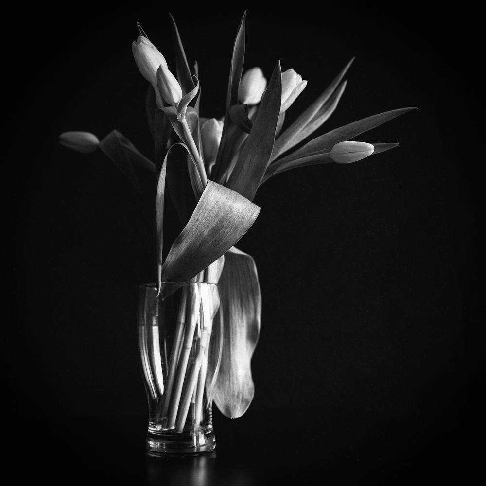 Tulips_012.jpg