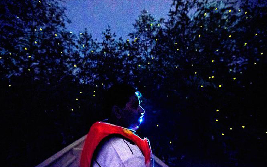 Noise pollution created by tour boats have disrupted firefly habitat.