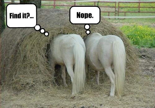 funny horse picture (35)-1.jpg