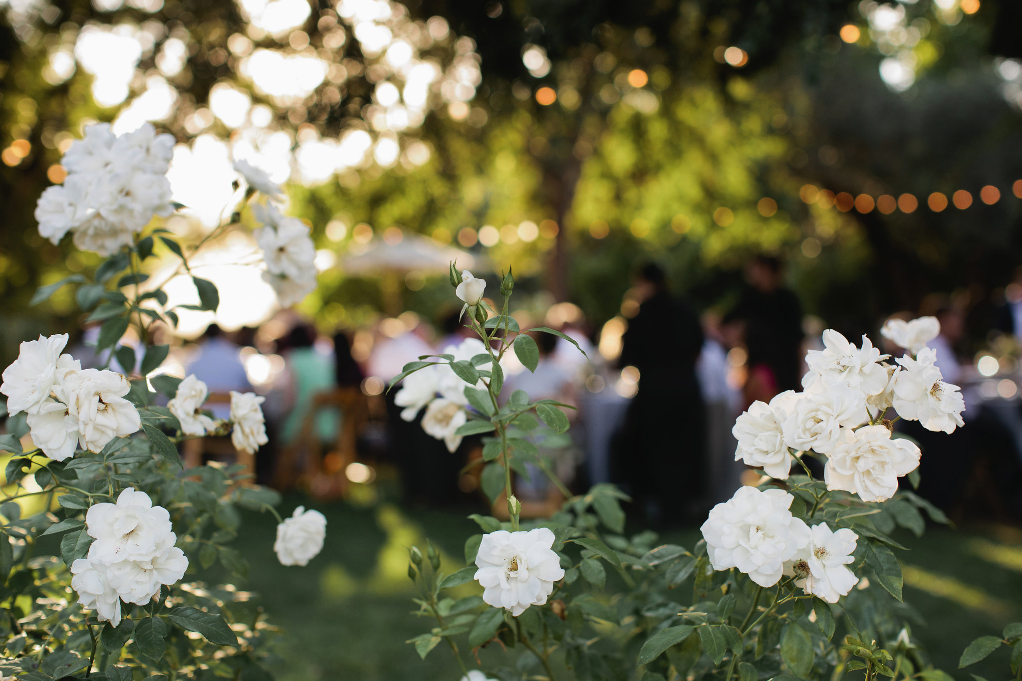 Healdsburg-Summer-Wedding-62.JPG