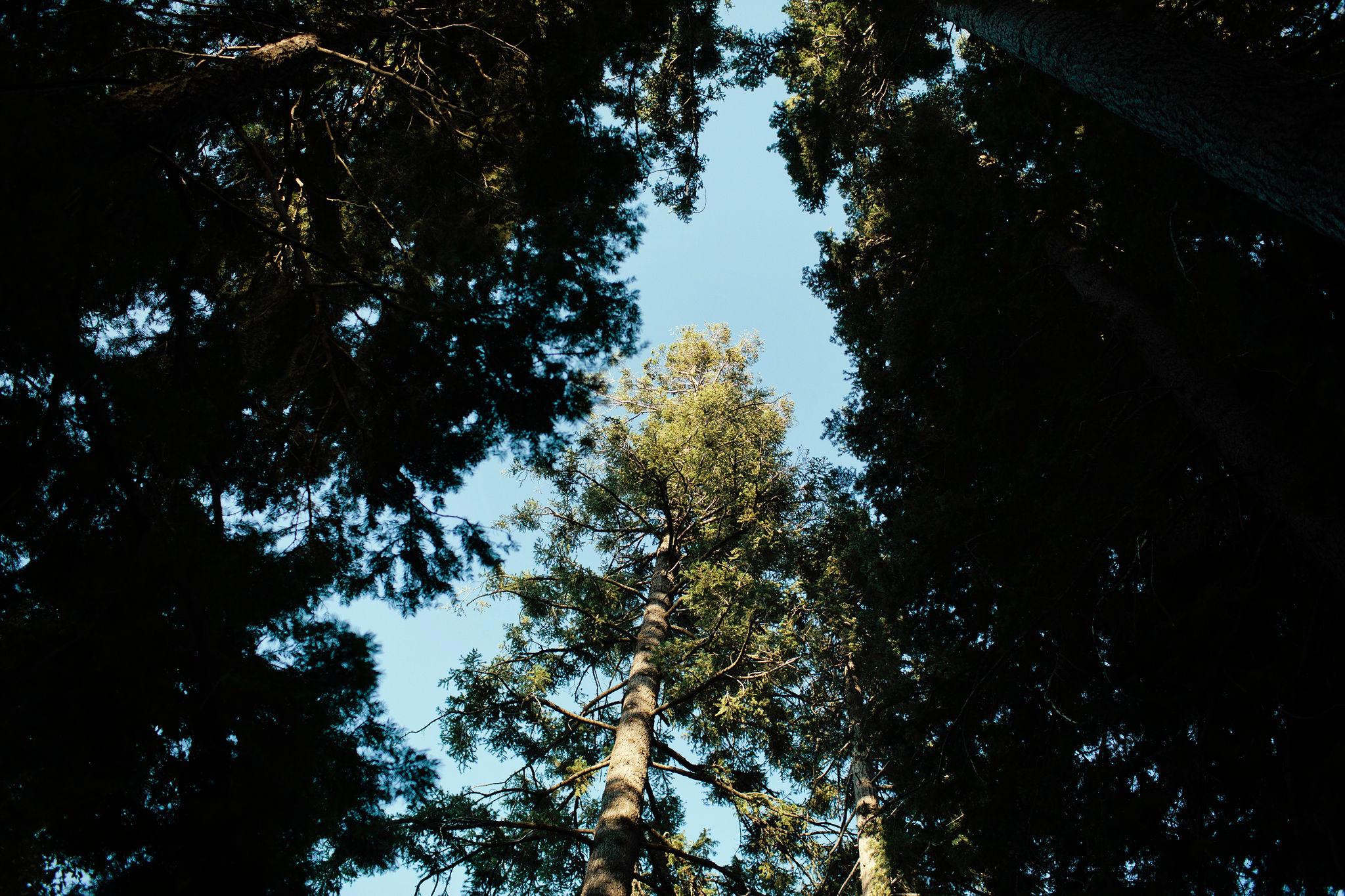 Tahoe-Summer-Wedding-072.JPG