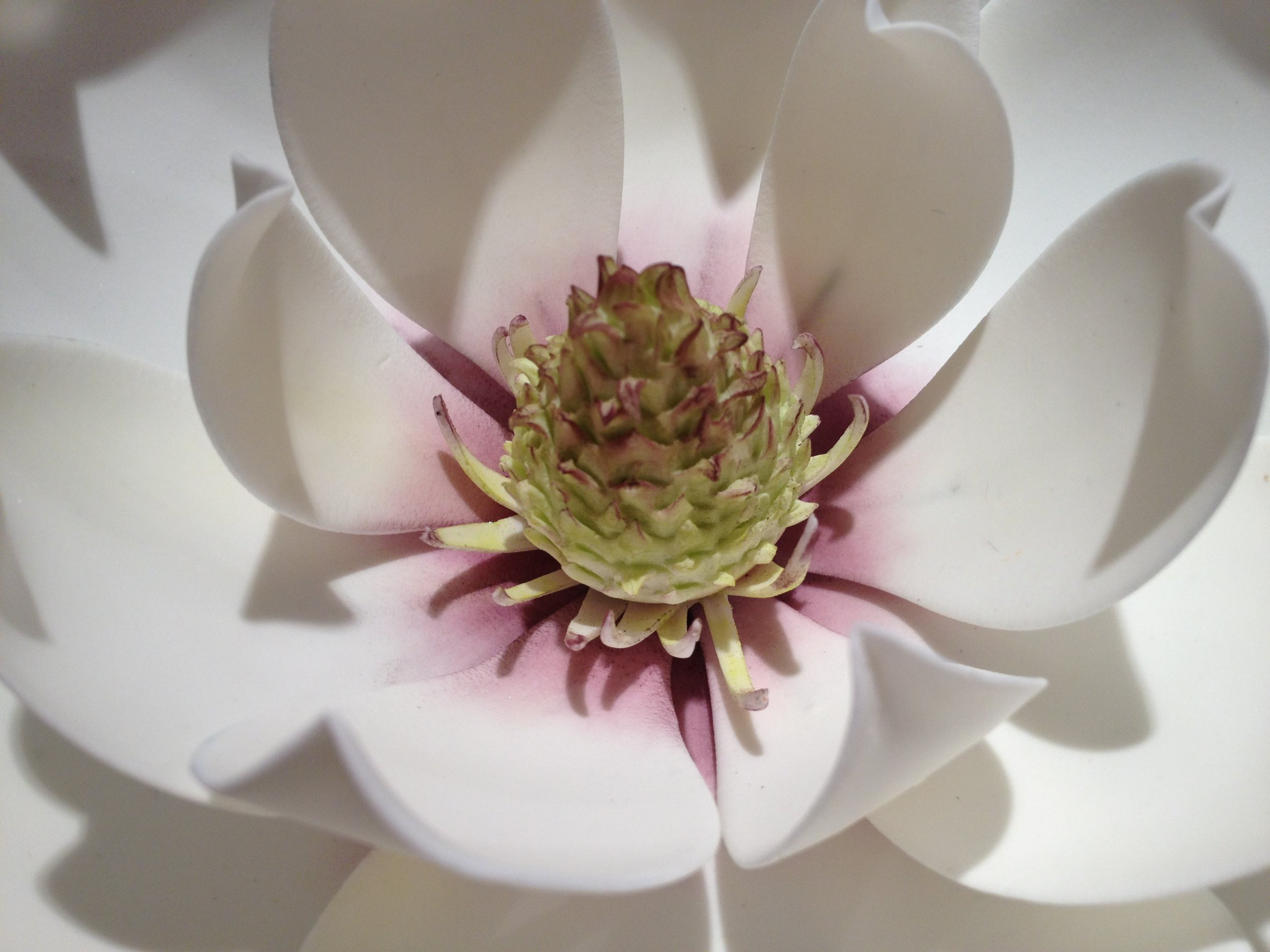 Southern magnolia in sugar