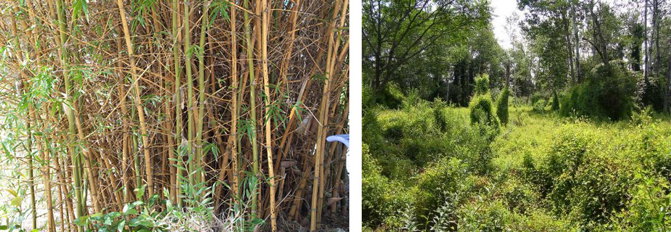 Bambooandmile.jpg