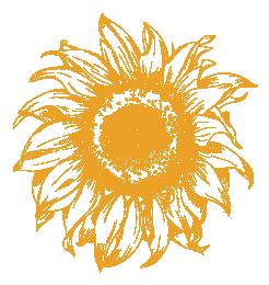 A Shift Happens Sunflower - Golden Yellow@0.5x.png