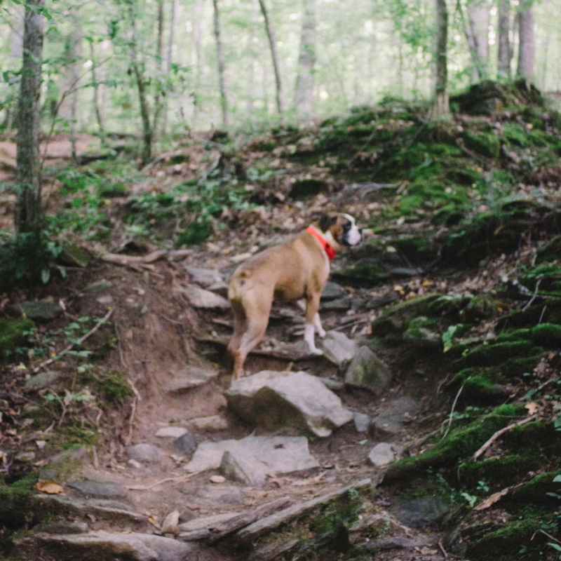"At this point Rocko got a bit ahead of me on the trail. I wasn't sure what to expect at the top so I told him to ""Wait"" he stayed in place until I reached him and released him to follow."