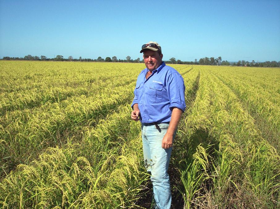Brett Slater 2009 Bd Rain Fed Rice Crop.jpg