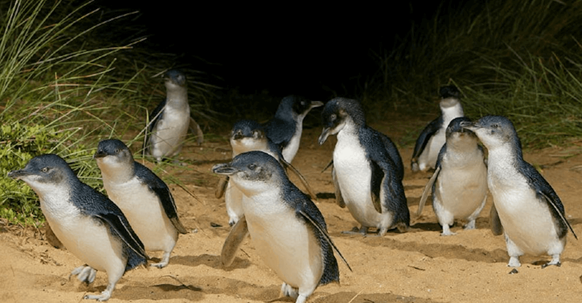 02 Penguins.png