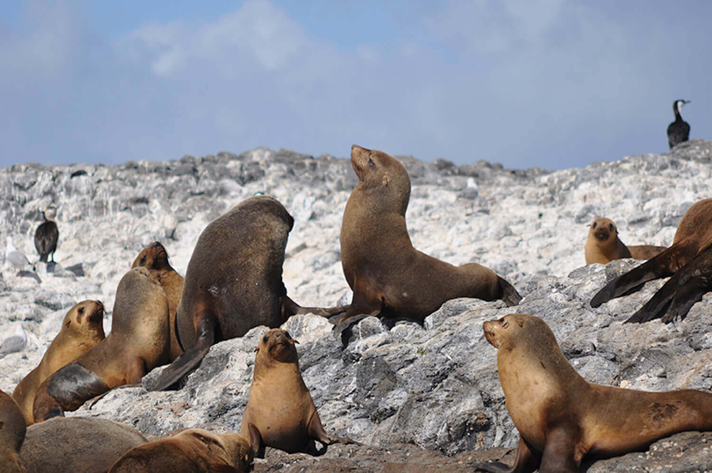 09 Seals.jpg