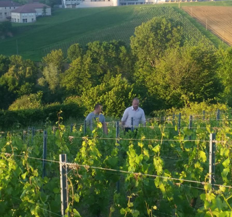Benjamin dirx vigne.png